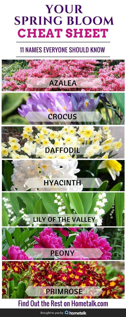 Spring flowers pics and names wallsmiga best 25 spring flowers ideas on mightylinksfo