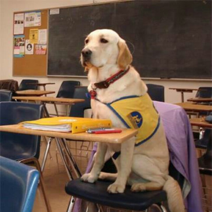 Going to school! Dogs With Special Talents Pinterest