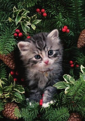 25 Best Ideas About Christmas Cats On Pinterest