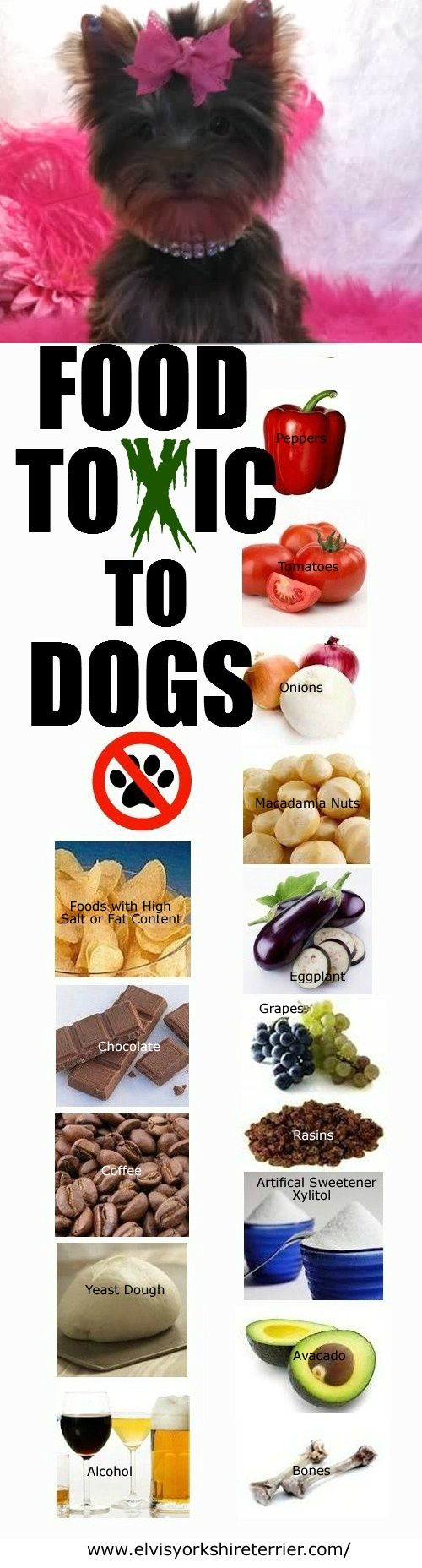 These foods are TOXIC to do