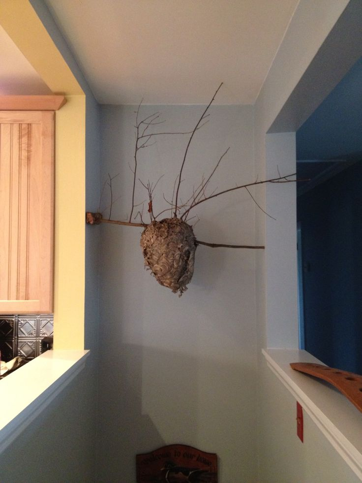 Wasp Nest For Homedecor Bringing The Outdoors In Rustic