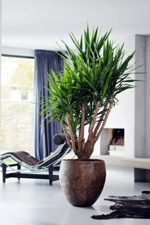 Palmlilie Yucca Wohnzimmer Liege Pelzteppich Pflanzen