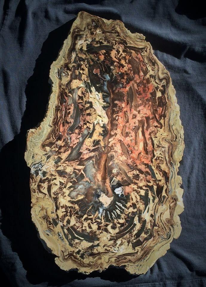 """Very rare Petrified woodMonocot """"Pandanus"""" Beaver Rim"""