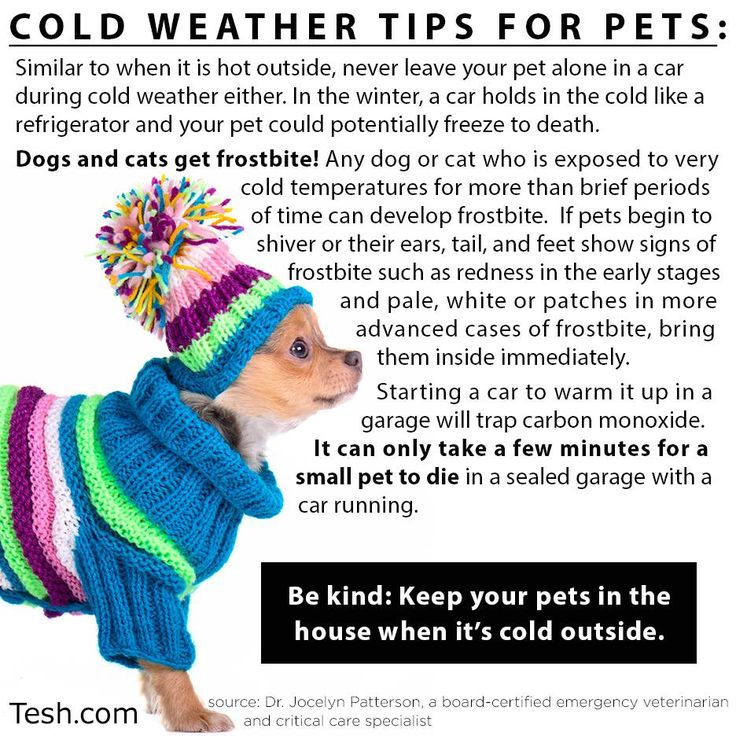 Cold weather tips for pets Winter Pet Safety Tips
