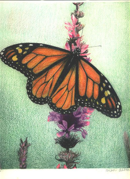 1000 ideas about butterfly drawing images on pinterest white