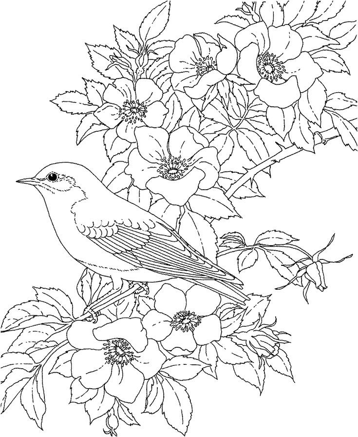 adult coloring pages printable free  free printable