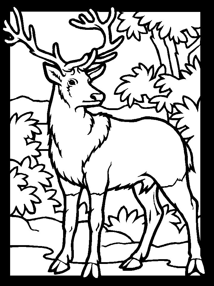 coloring pages coloring and deer on pinterest