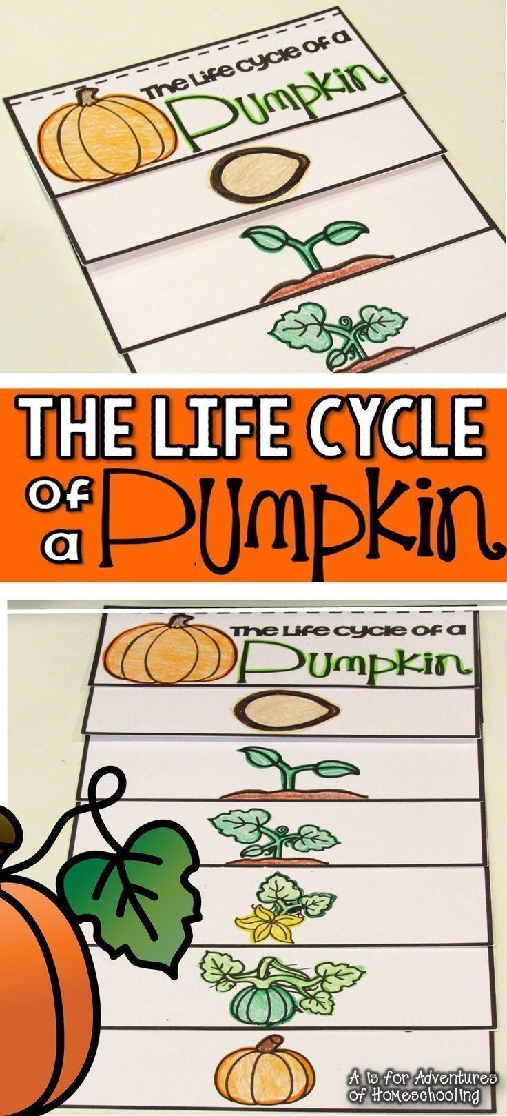 Pumpkin Life Cycle FREEBIE! TpT FREE LESSONS Pinterest