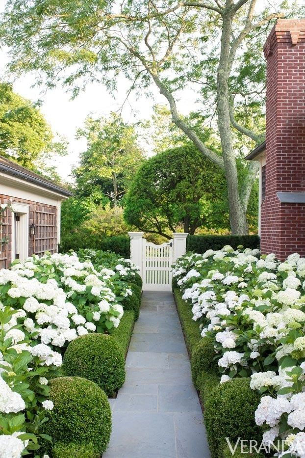 Modern Country Style Hydrangeas, Topiary And Boxwood In