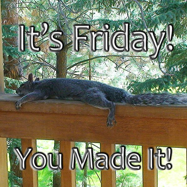 Yay Friday! Squirrel funny TGIF Laughter is the Best