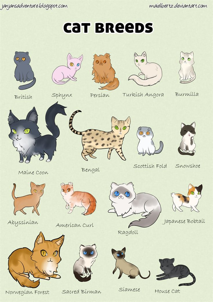 cat breeds list with pictures Pesquisa Google Cats