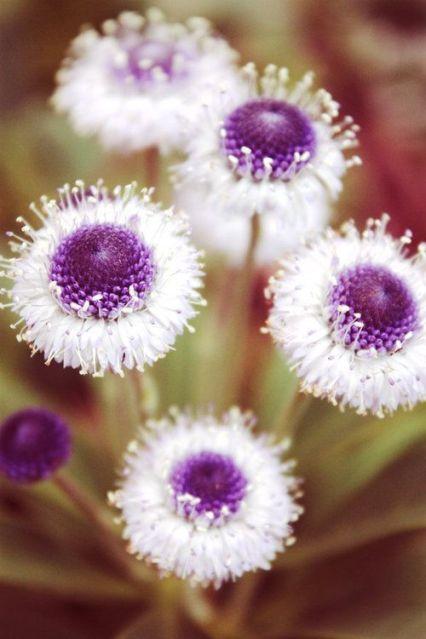 Getty Villa vi on FURKL.COM (6/5/2013) Nature: Garden: Flowers Plants: