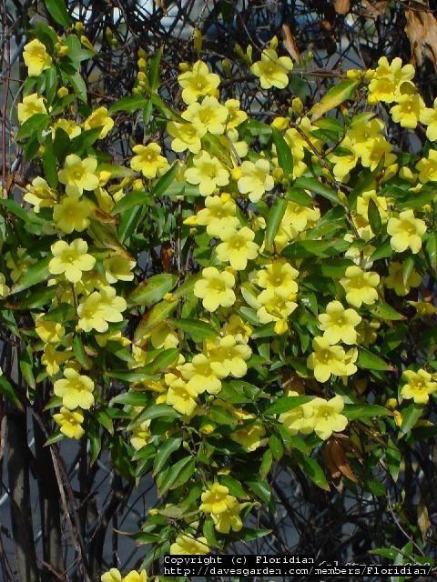 Evergreen Flowering Shrubs South Carolina