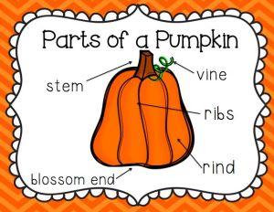 parts of a pumpkin: Halloween Crafts First Grade, Teacher