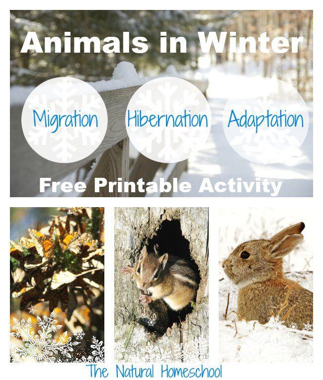 Animals in Winter Migration, Hibernation & Adaptation