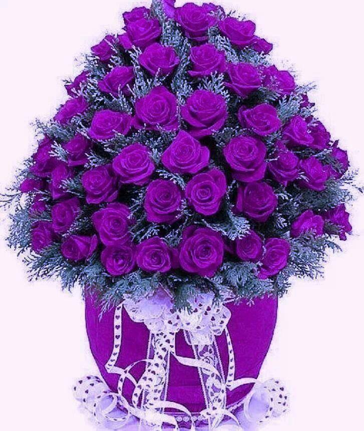 Pretty Purple Roses Flowers Pinterest Beautiful