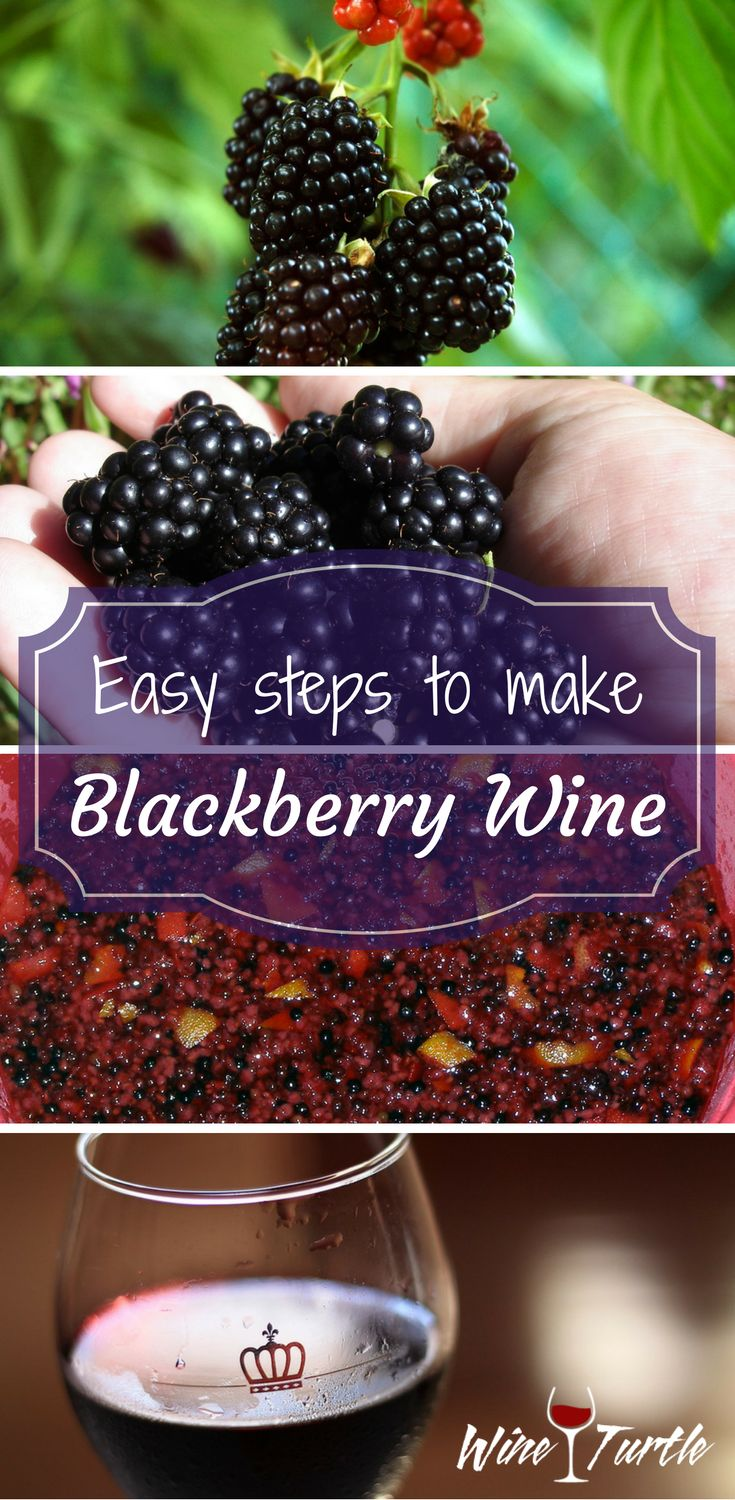 Delicious Homemade Blackberry Wine in 4 Easy Steps! How