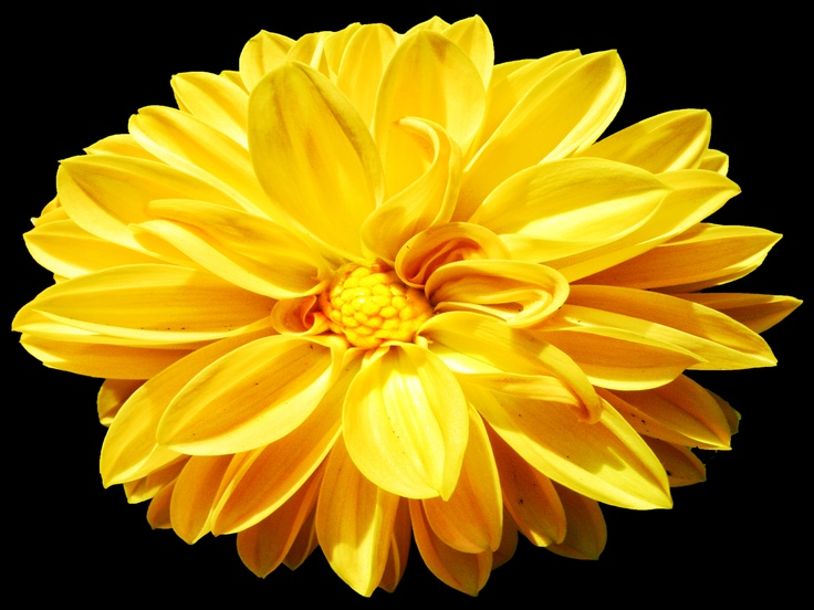 Yellow flowers mean friendship, joy and happiness
