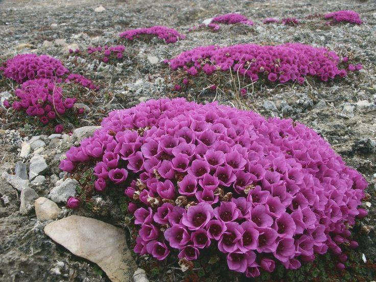 Canadá Nunavut Resuelto aussie_cameraman Purple