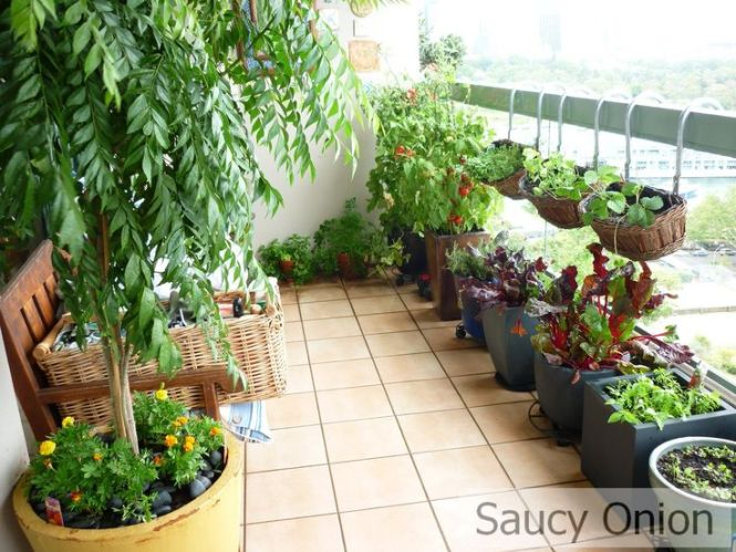 Balcony Garden Ideas Sydney Best Balcony Design Ideas Latest
