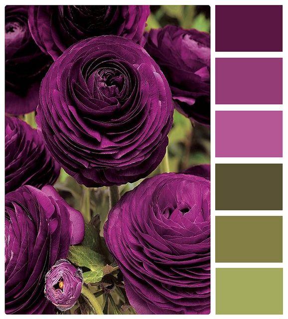 Purple and green [deep purp