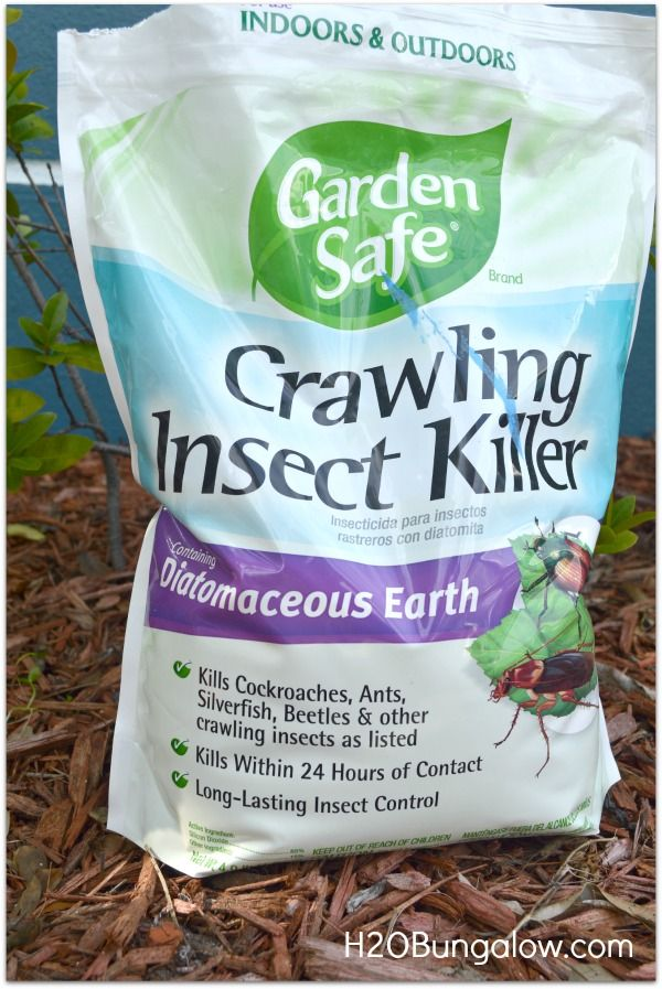 Organic Pest Control That Works Other, Roaches and Slug