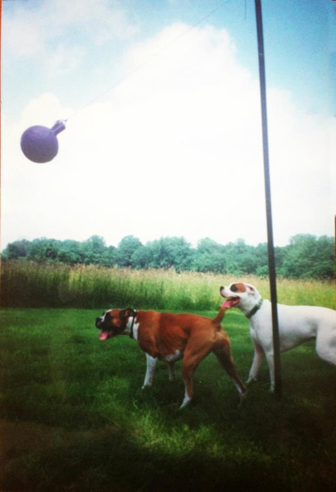 Old Laundry Line Or Fence Pole Tether Ball For Your Dog Just Add A Jolly Ball And Let The