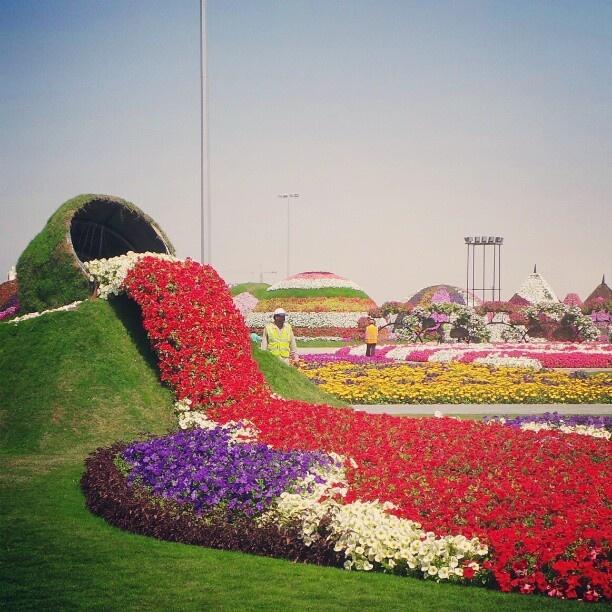 Dubai Miracle Garden. Photography Abdulla AlBuqaish