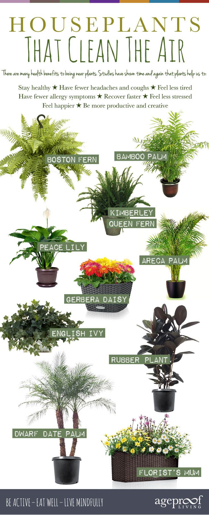 10 Best Houseplants That Clean The Air – We all know that fresh air is vital for our good health, but what if you're stuck