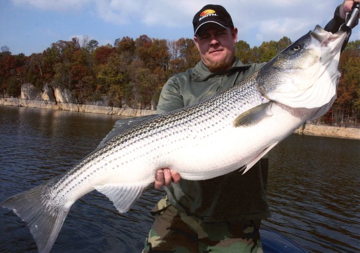 how to catch striped bass in the hudson river