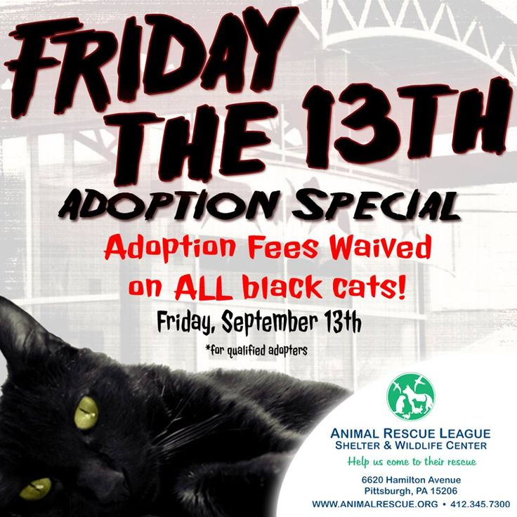Friday Adoption Ideas Cat Black