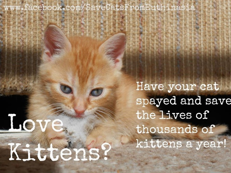 Spay and neuter saves lives! Animal posters & memes