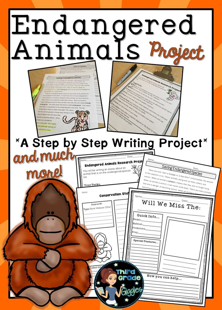 Endangered Animals Step By Step Research Report A well
