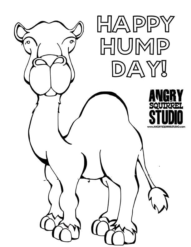 hump day hump day camel and its hump day on pinterest