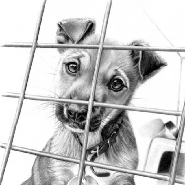 17 Best images about W Pictures Drawings Animals, Puppys