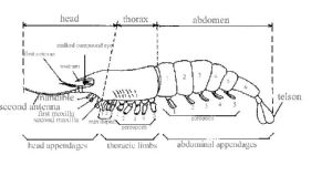 Arthropod Diagram | Phylum Arthropoda | Pinterest