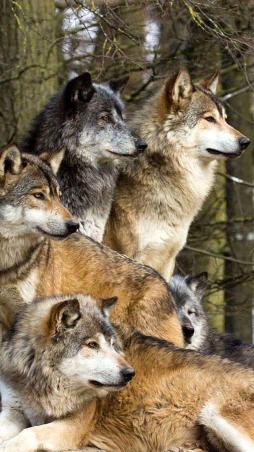 I really want to right a werewolf pack story on Wattpad, but I think itd be really cool if it was written in different perspective