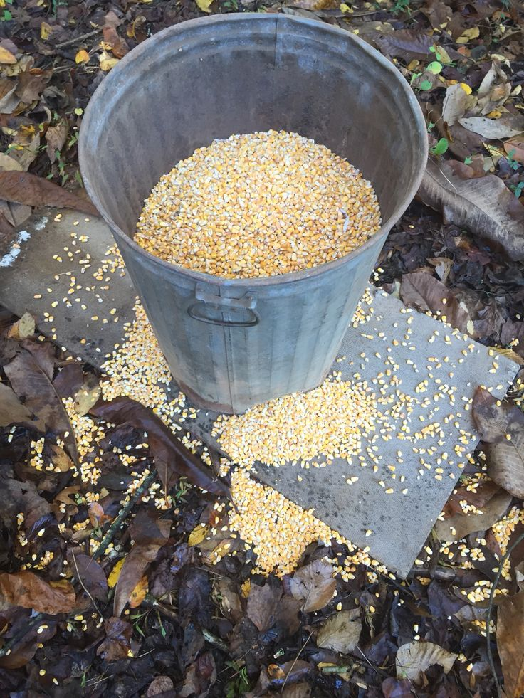 Homemade deer feeder from old trash can Do it yourself