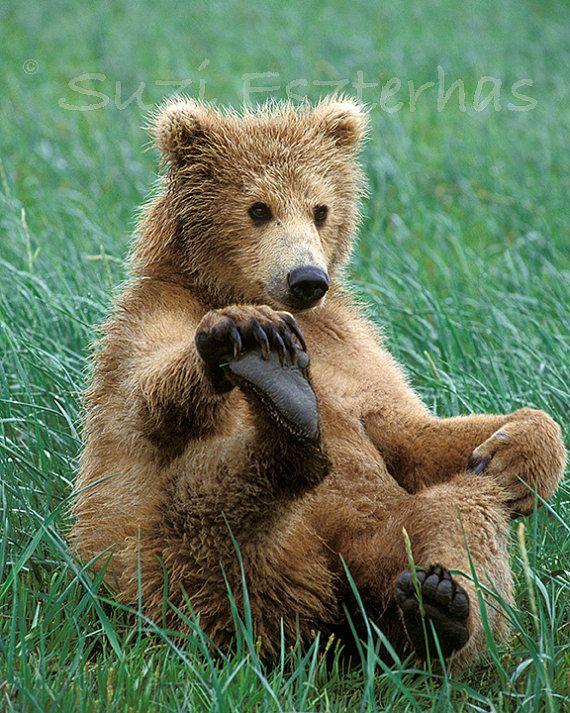 Baby Animal Photography, FUNNY BABY BEAR Photo Print