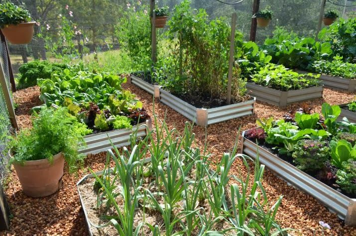 Great vegetable garden urban farming Edible Gardening