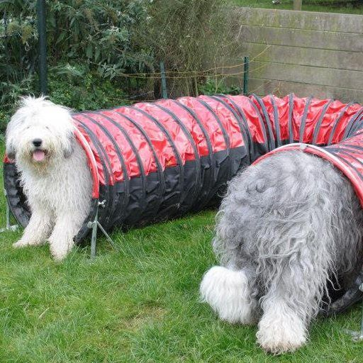 118 Best Images About Old English Sheepdogs On Pinterest