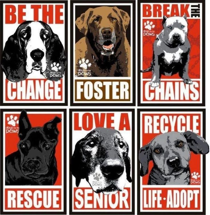 For the love of dogs, do something! ♥ Animal Rescue