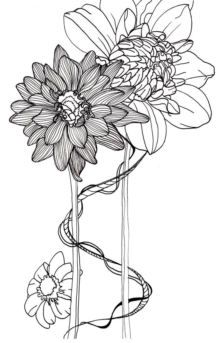 line drawing flowers dahlias Drawings Pinterest