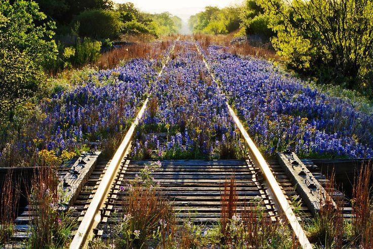 Texas On Railroad Tracks Jeremy Woodhouse