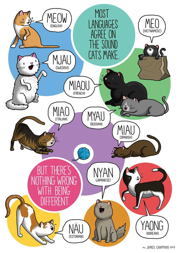 How to meow in other languages! I Teach That Pinterest