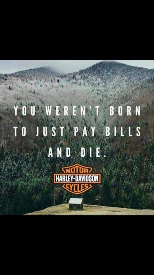 Best 20 Harley Davidson Quotes Ideas On Pinterest