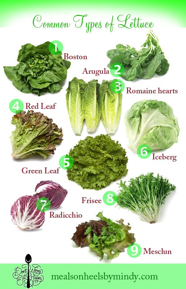 Don't Worry, Eat Happy A List of Common Lettuce Varieties