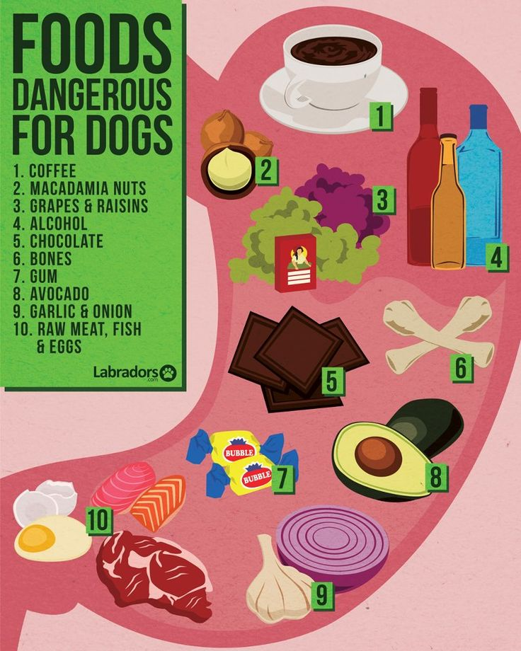 Dangerous foods for dogs Animals Pinterest To be