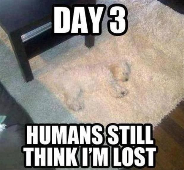 wheres the dog?…hahaha that would be like my buffy!