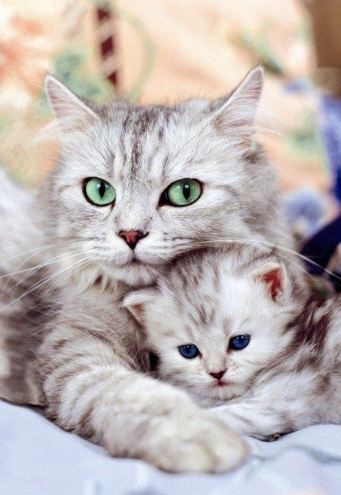 Adorable eyes of cat and kitten looking so cute sitting together….. (click on picture to see more stuff)